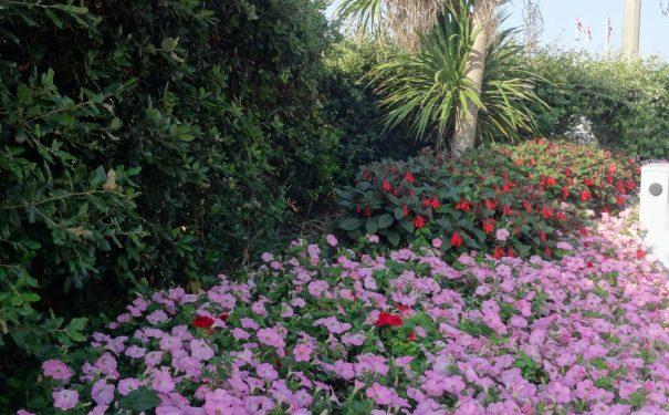 M&S flower bed